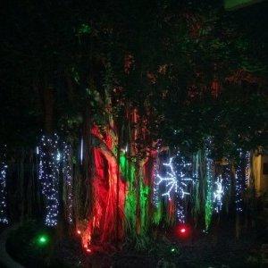 Banyan tree at the Hale Koa