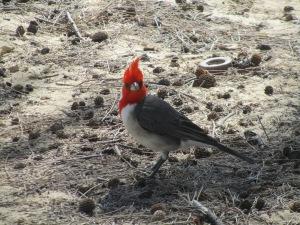 Fancy Bird by our beach cabin